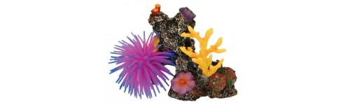 Aquarium Plants and Coral Reefs