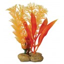Aquatic Assorted Plants with Pebble Base